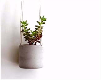 39 best Planten images on Pinterest
