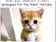 Cat Quotes Funny Inspirational Wakker Worden Sebastian Aka Punk