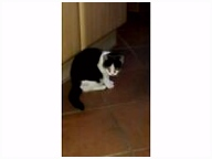 Zugelaufene Katze eBay Kleinanzeigen
