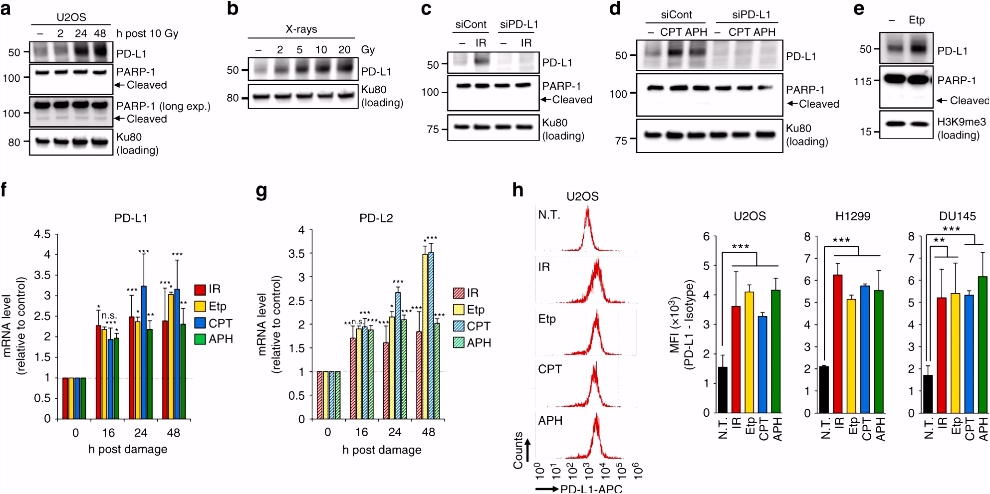 DNA double strand break repair pathway regulates PD L1 expression in