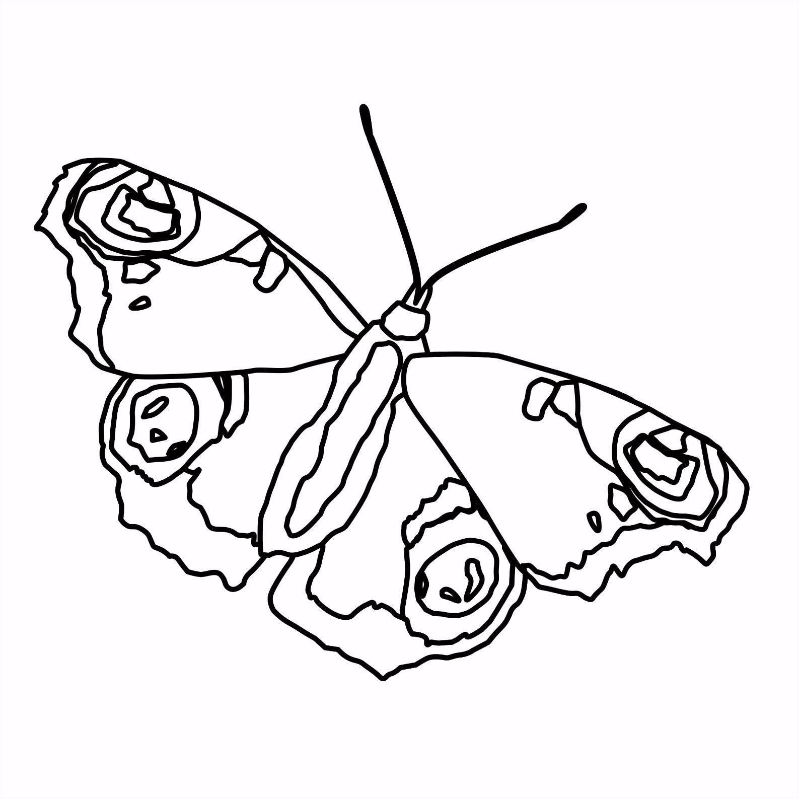 Window Color Vorlagen Schmetterling Beau s Kostenlose