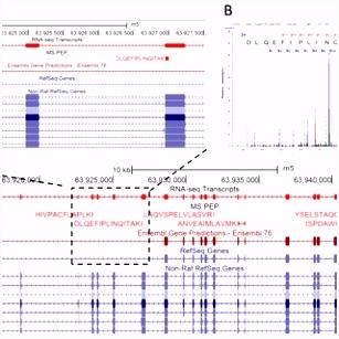 PDF Integrated Transcriptomic Proteomic Analysis Using a