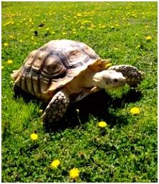 Die 1315 besten Bilder von Schildkröten in 2019