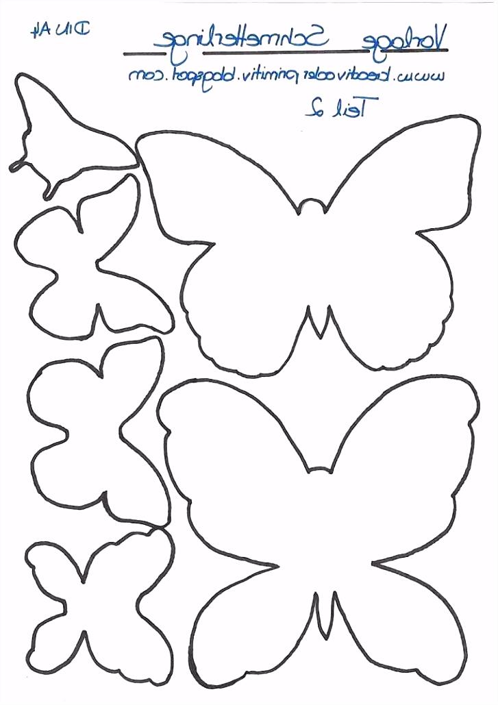 Neu Schmetterling Vorlage Zum Ausdrucken