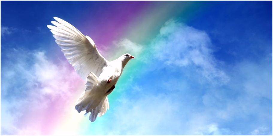 Friedenstaube Vorlage Tauben Tattoos Bedeutung Und Hübsche Motiv Vorlagen Z9oe83eff7 Pmtlv5iez5