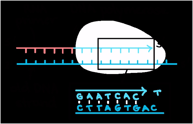 DNA structure and replication review article