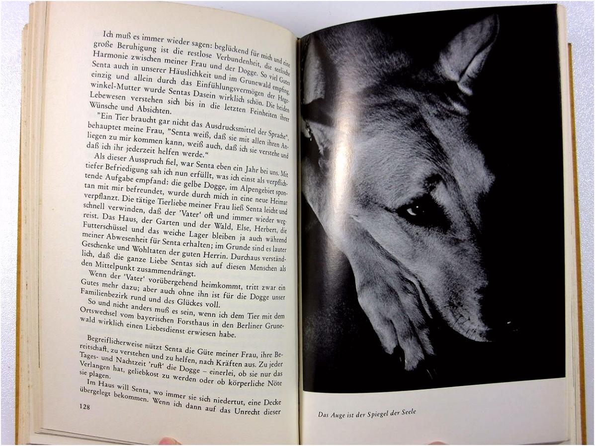 """Hund und Katze Die gelbe Dogge Senta"""" Paul Eipper – Buch"""