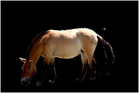 90 kostenlose Pferd Freigestellt und Freigestellt Bilder Pixabay