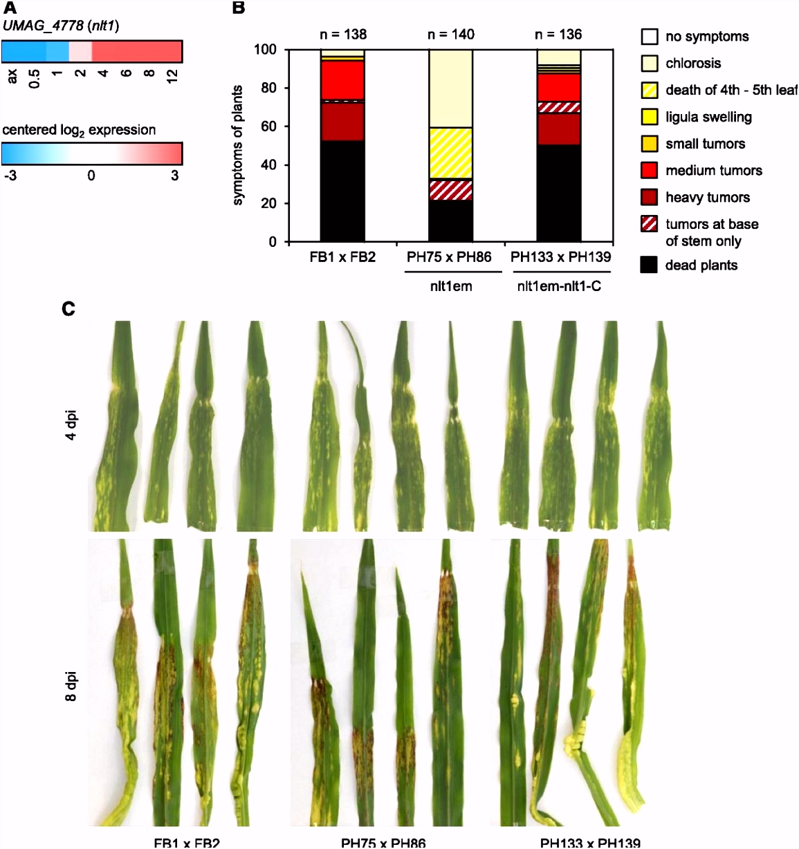 The Biotrophic Development of Ustilago maydis Stu d by RNA Seq